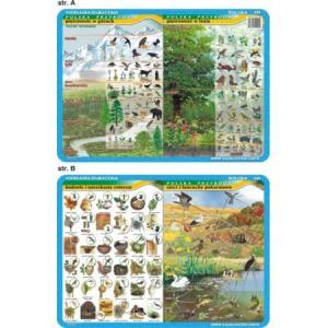 Podkładka edukacyjna 020 Biologia. Piętrowość w Górach i Lesie, Budowle Zwierząt, Łańcuchy Pokarmowe