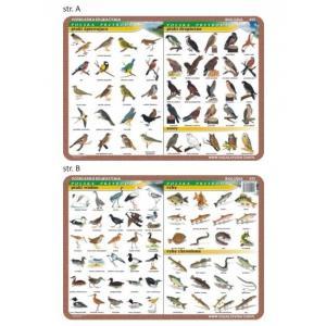 Podkładka edukacyjna 022 Biologia. Ptaki Wodne, Śpiewające, Drapieżne, Ryby