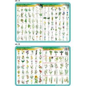 Podkładka edukacyjna 023 Biologia. Rośliny Ogrodowe, Uprawne, Pospolite i Chronione