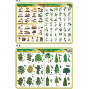 Podkładka edukacyjna 024 Biologia. Grzyby, Rośliny Lecznicze i Zioła, Drzewa Liściaste i Iglaste