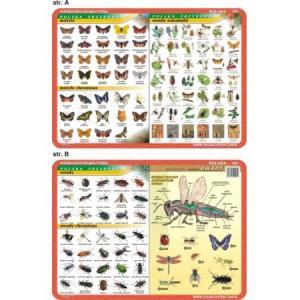 Podkładka edukacyjna 025 Biologia. Motyle, Owady Szkodniki, Owady