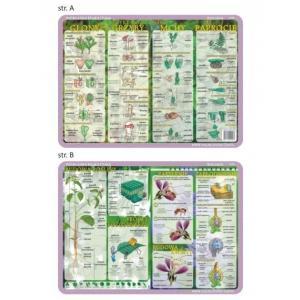 Podkładka edukacyjna 026 Biologia. Budowa Rośliny i Kwiatu, Cykl Rozwojowy Glony,Grzyby,Mchy,Paproc