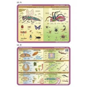 Podkładka edukacyjna 052 Anatomia Zwierząt. Owady, Pajęczaki, Pierwotniaki, Płazińce