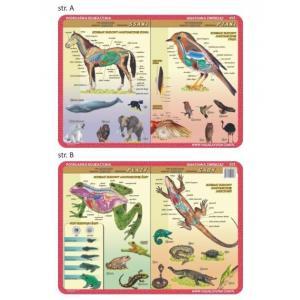 Podkładka edukacyjna 053 Anatomia Zwierząt. Płazy, Gady, Ssaki, Ptaki
