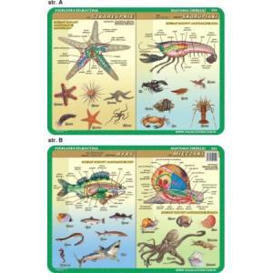Podkładka edukacyjna 054 Anatomia Zwierząt. Szkarłupnie, Skorupiaki, Mięczaki, Ryby