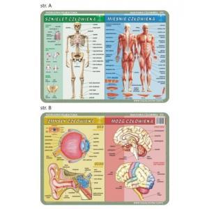 Podkładka edukacyjna 055 Anatomia Człowieka. Szkielet, Mięśnie, Mózg i Zmysły Człowieka