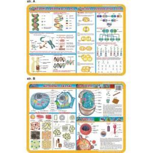 Podkładka edukacyjna 057 Anatomia Człowieka. Komórki i Tkanki,Bakterie i Wirusy,Replikacja DNA,Mejoz