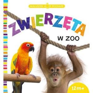 Maluszek Poznaje Zwierzęta w Zoo