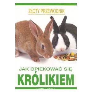 Jak opiekować się królikiem