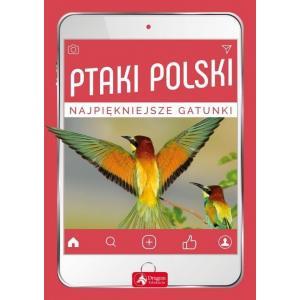 Ptaki Polski. Najpiękniejsze gatunki