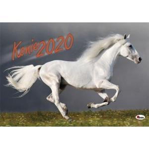 Kalendarz Konie 2020